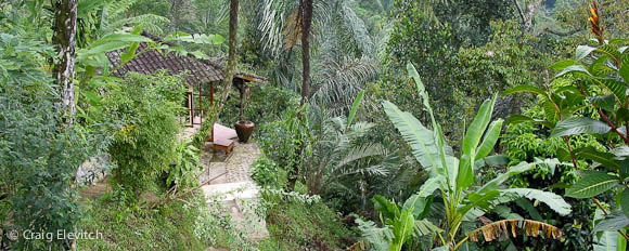 Homegarden on sloping land in Bali