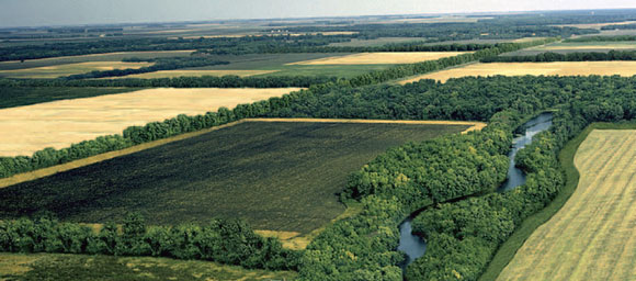 North American Agroforestry landscape